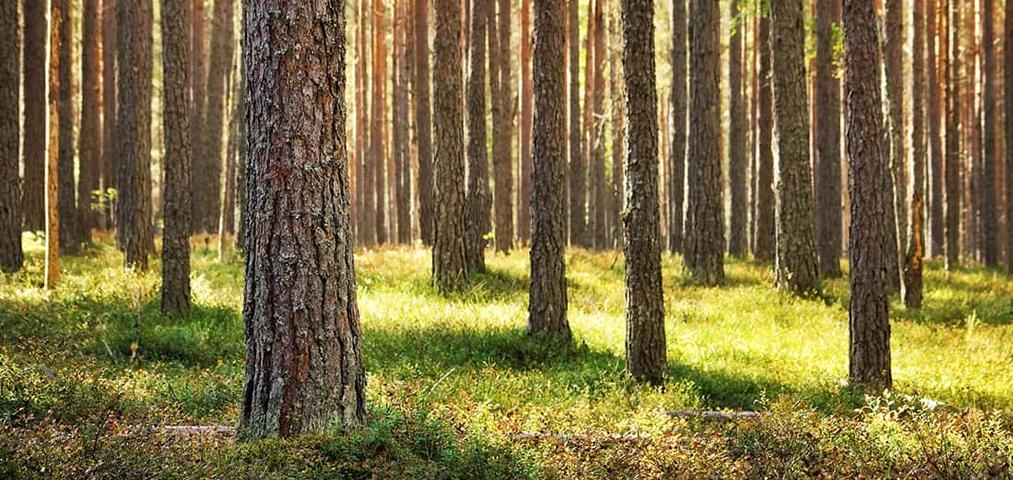 Millist puitu kasutame?