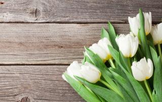 Soovime kõikidele neidudele ja naistele imeilusat naistepäeva!